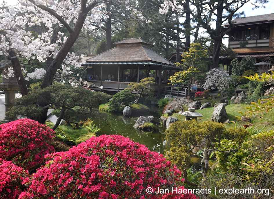 Cherry Blossoms In San Francisco Hakone Gardens And The Japanese Tea Garden Full Article